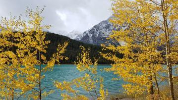 31 lac vermillion