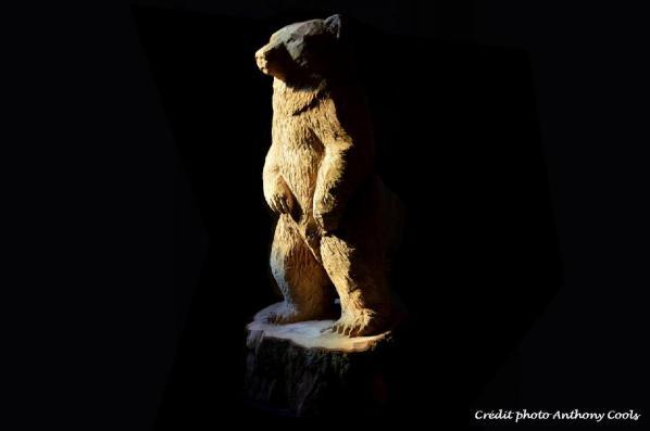 Petit ours bois