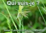 Quisuisje a